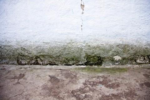 ทาสีรั้วกำแพง1